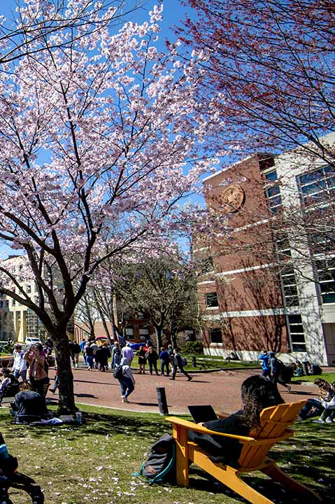 Students sitting in Centennial Common at Northeastern during Spring day with flowers on trees